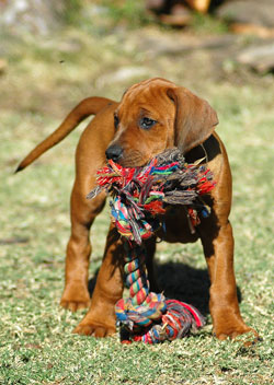 PuppyTraining
