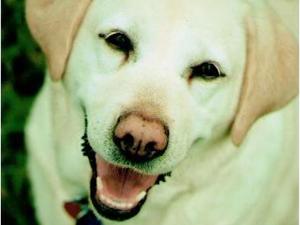 Sunny Geckle